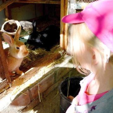 Haustier auf Probe oder wie ein kleines Mädchen seinen Traumurlaub erlebte