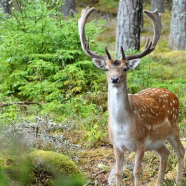 Südliches Småland mit Kindern: Eintauchen in die Natur