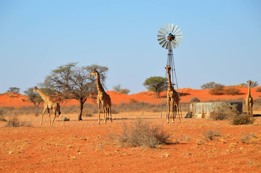 Namibia mit Kindern Roadtrip