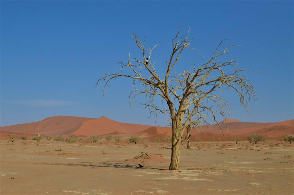 Namibia mit Kindern Sossusvlei