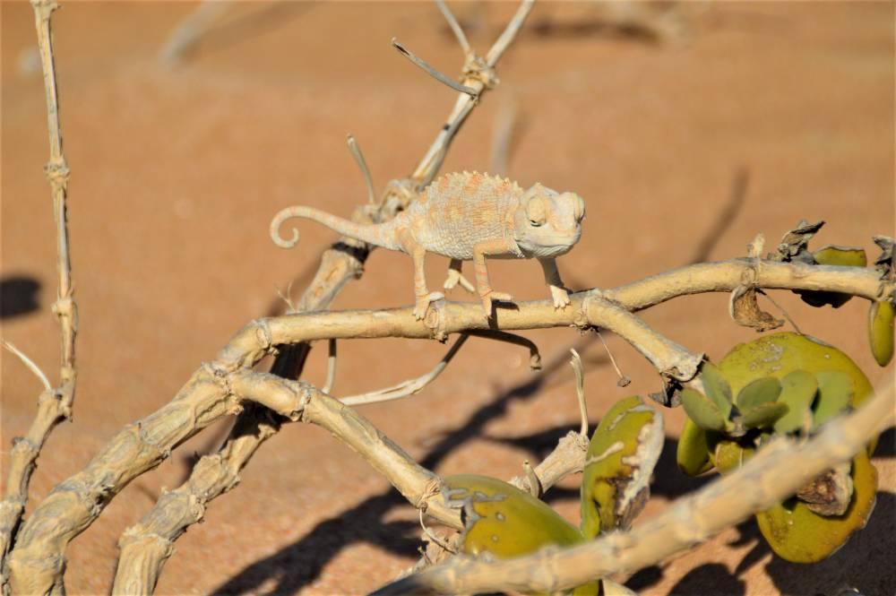 Namibia mit Kindern Swakopmund