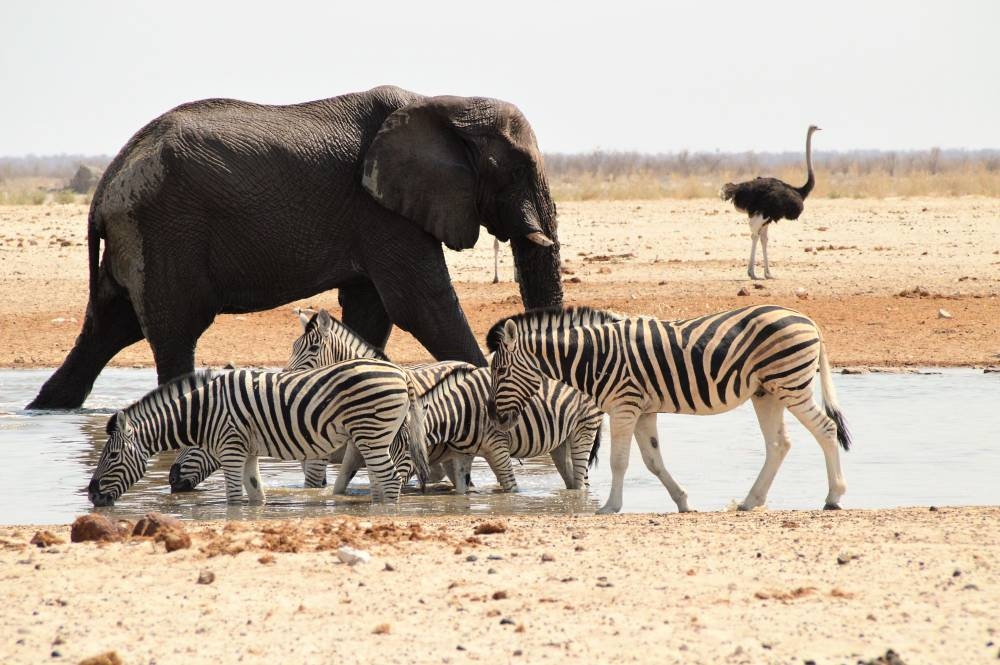Namibia mit Kindern Etosha