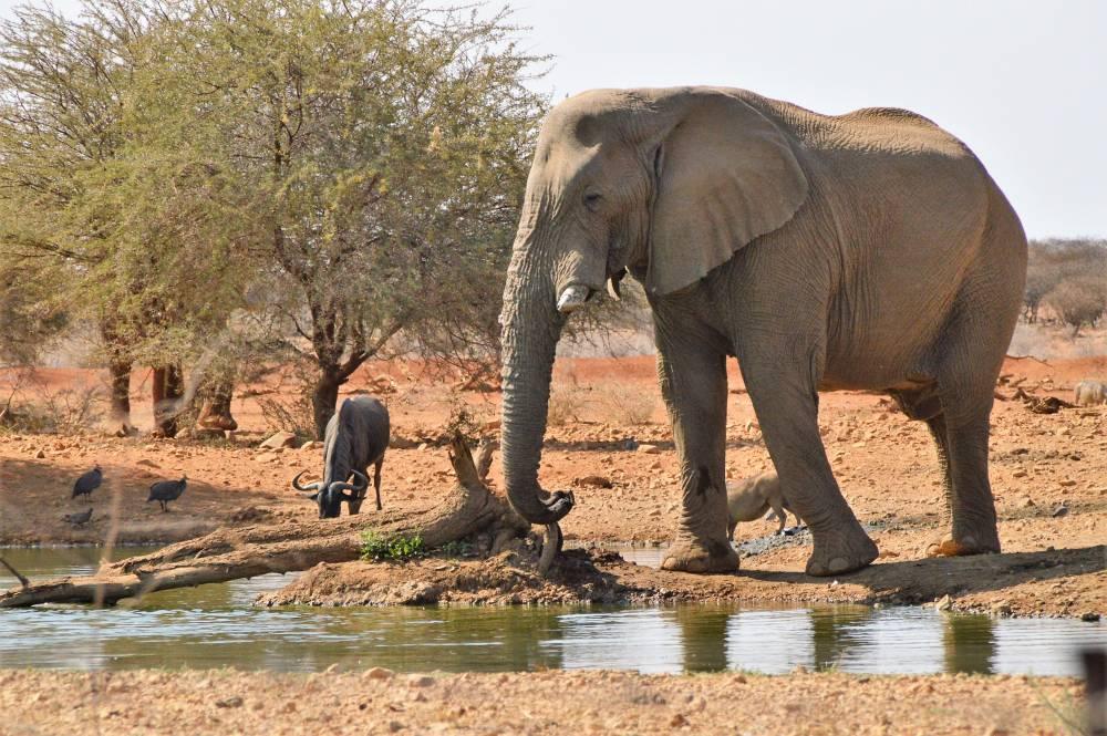 Namibia mit Kindern Elephant Lodge